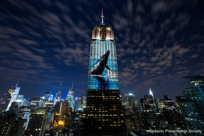 The activist filmmakers behind 'Racing Extinction' project a whale onto the Empire State Building.