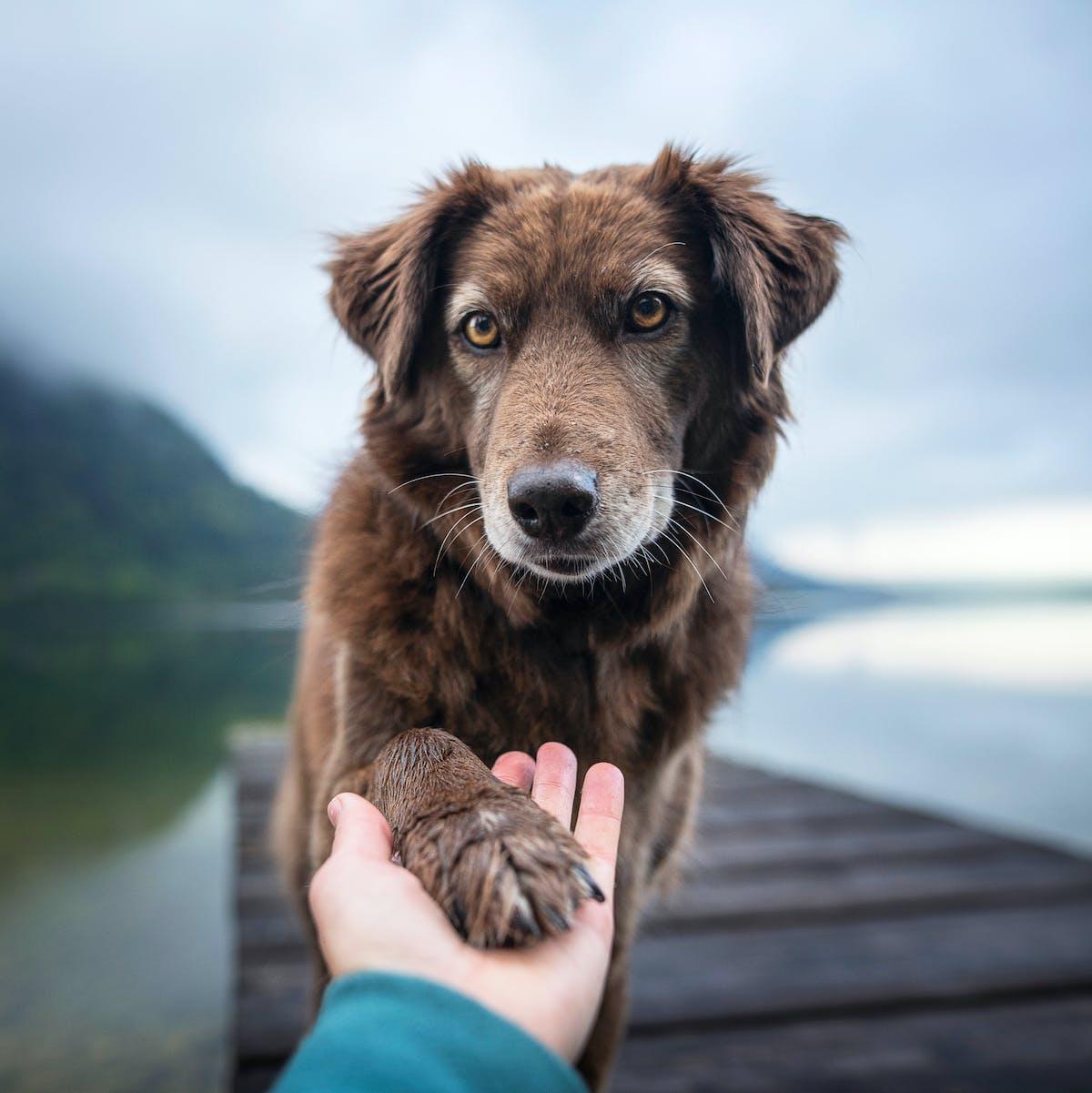 """Companion dog acquisition"" has a scientifically proven benefit"