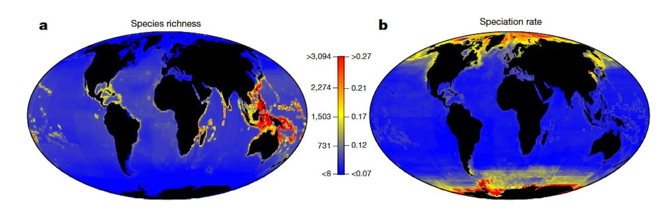 fish speciation evolution