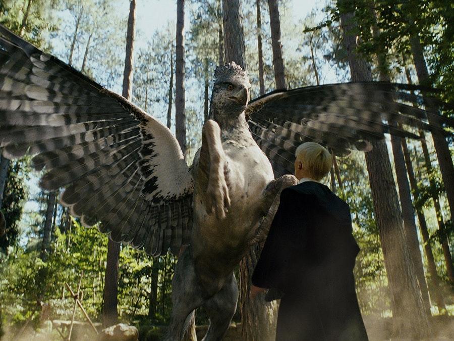 Buckbeak in Draco Malfoy's grill
