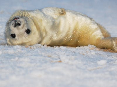 NOAA Releases Anti-Selfie Stick Advisory to Save Baby Seals From Human Monsters