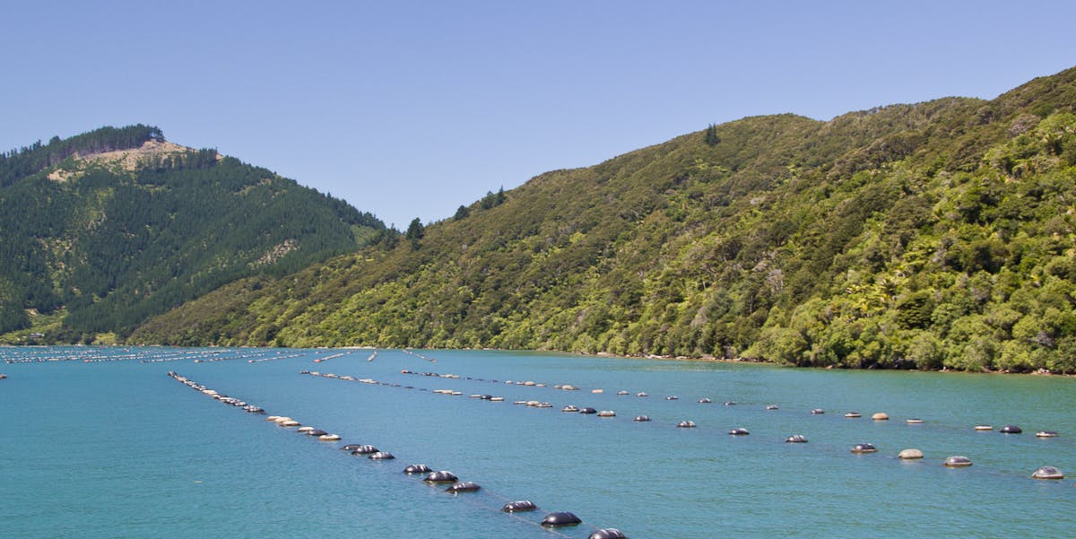 A New Zealand Green Lipped Mussel Farm near Havelock, South Island, New Zealand