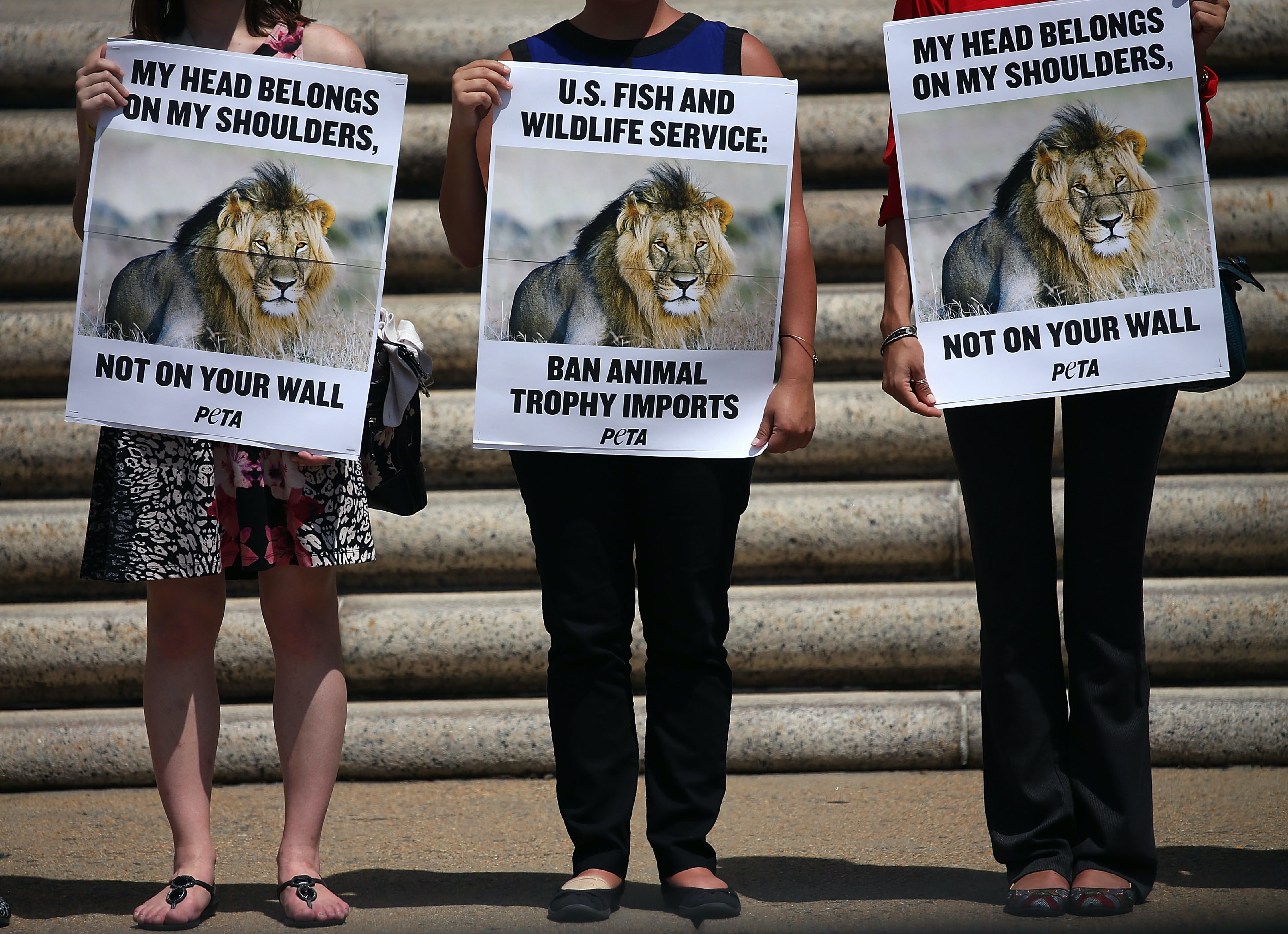 Protesters hold pictures of Cecil the Lion as they stand in front of the Department of Interior building to protest against the importing of wild game killed as trophies August 5, 2015 in Washington, DC.