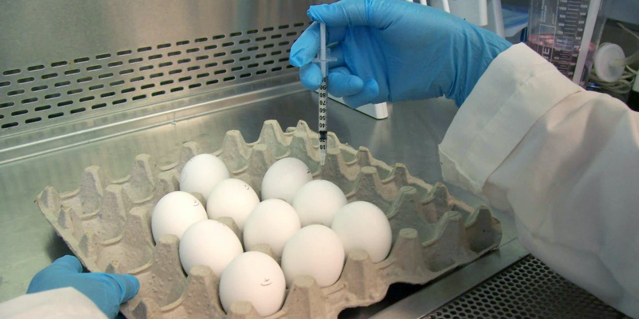 An FDA laboratory worker injects an influenza virus into an egg, where it will grow before being harvested.