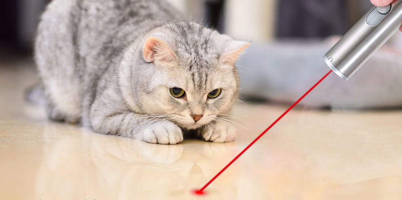 FZR Legend Rechargeable Cat Laser Pointer,Pet Dogs Interactive Toy with 3 Modes