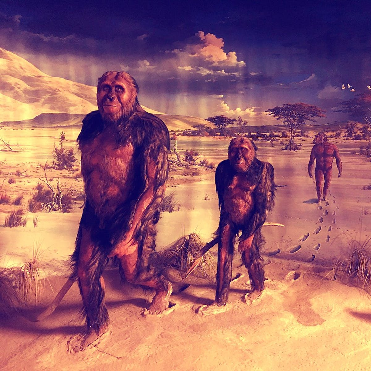 How ancient cosmic explosions may have forced humans to walk upright