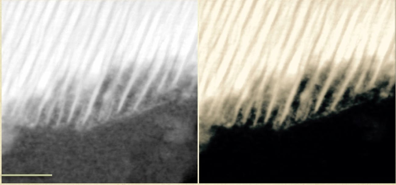 organic carbon image