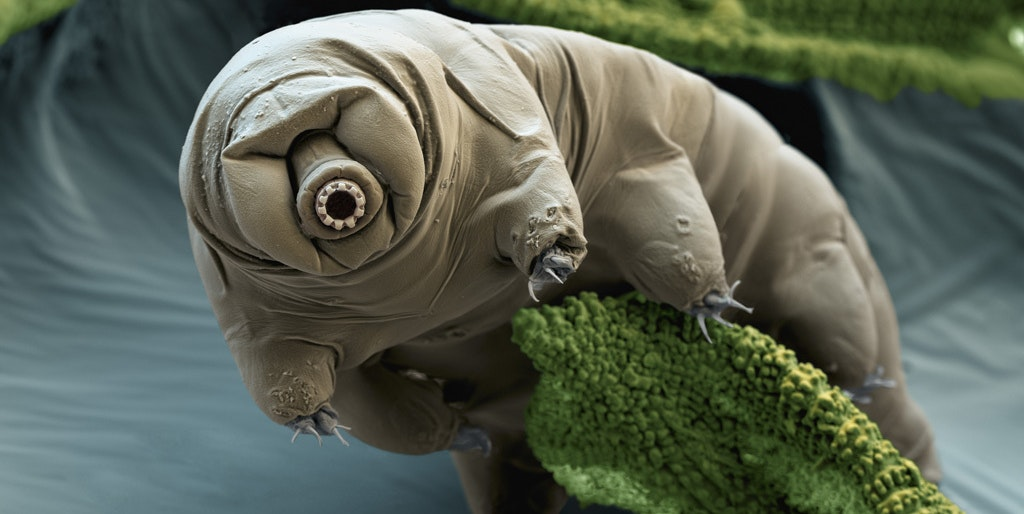 tardigrade moss radiation