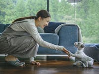 aibo sony robot dog