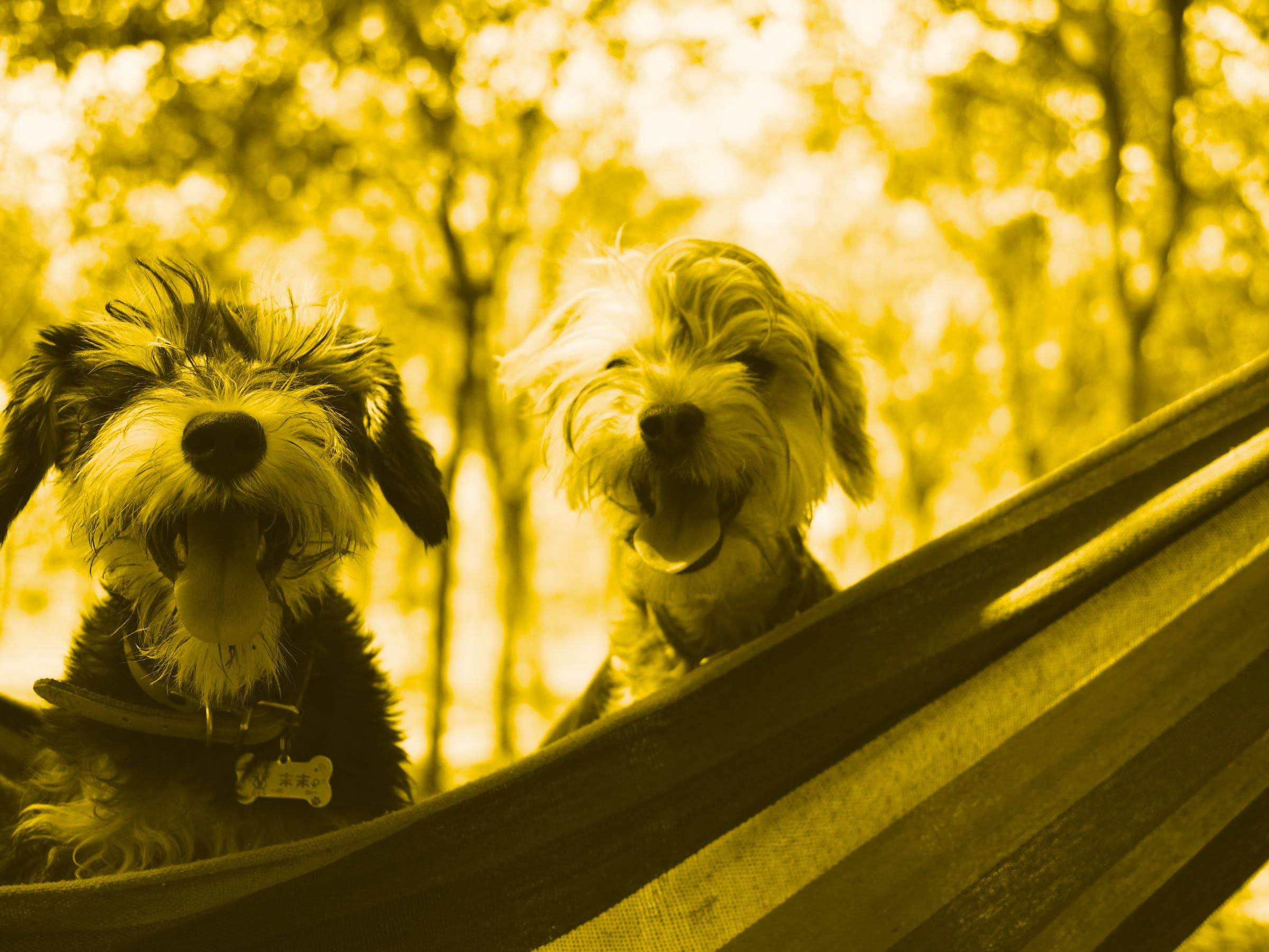dogs in a hammock :)