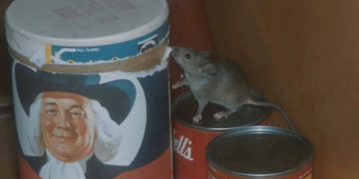 mouse on a can