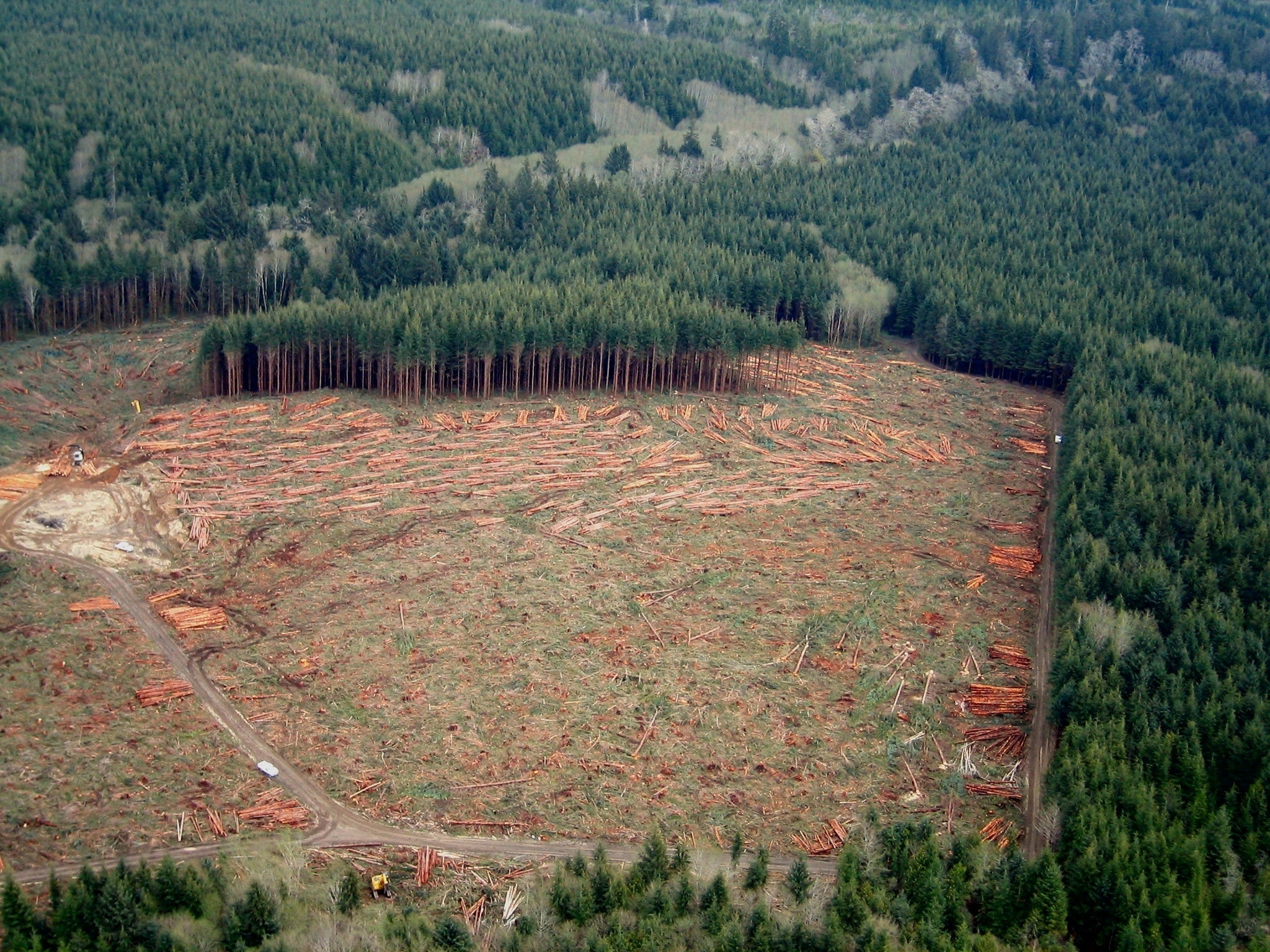 A clearcut forest on Washington State's Olympic Peninsula.