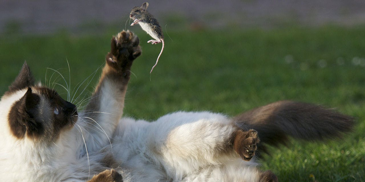 Cats Are an Ecological Nightmare and Ruining the Environment