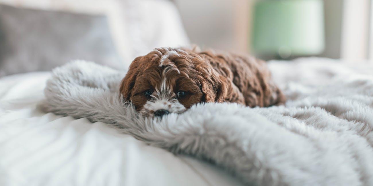 sleepin dog