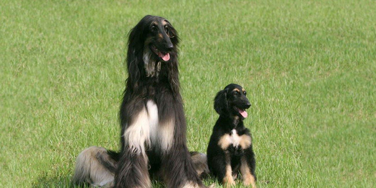 snuppy's puppies