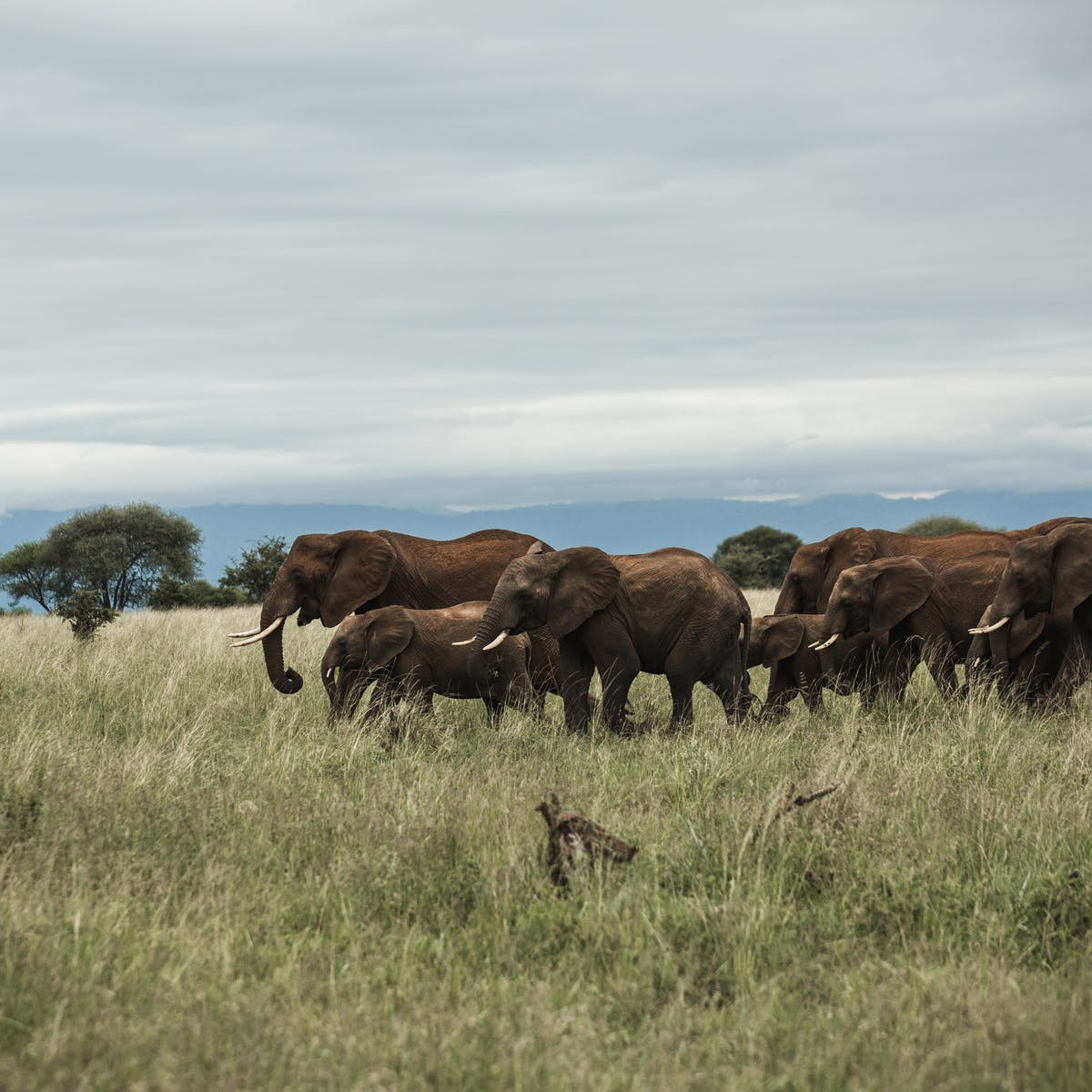 The Same A.I. That Tags Your Facebook Pics Can Also Stop Poachers: Video