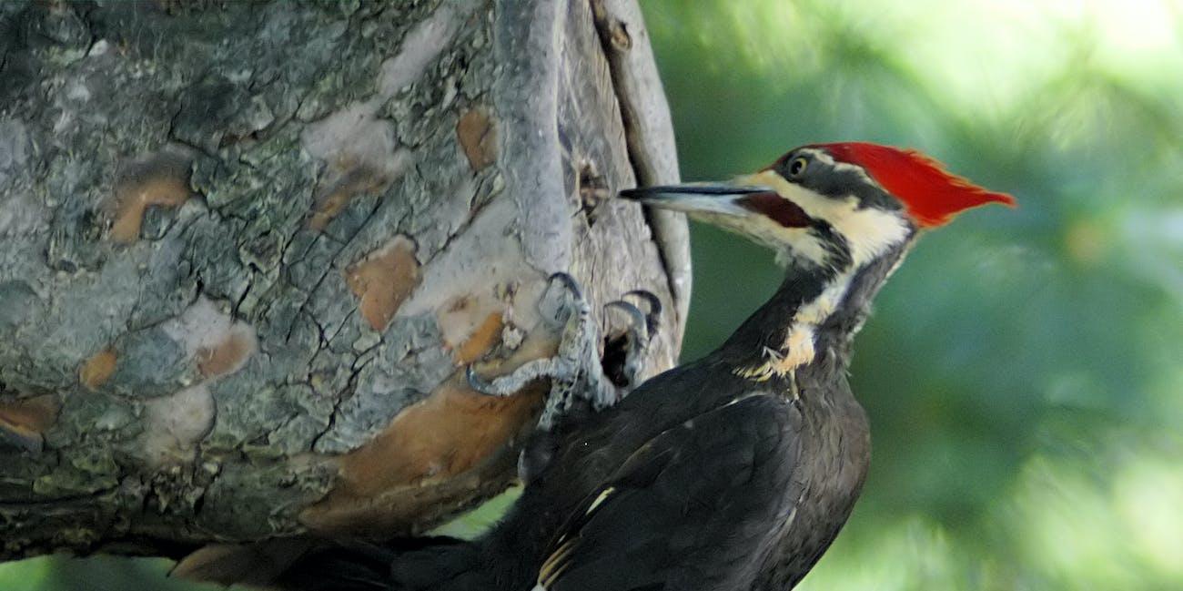 Woodpecker 20040529 151837 1c