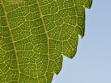 Can Artificial Photosynthesis Reverse Climate Change?