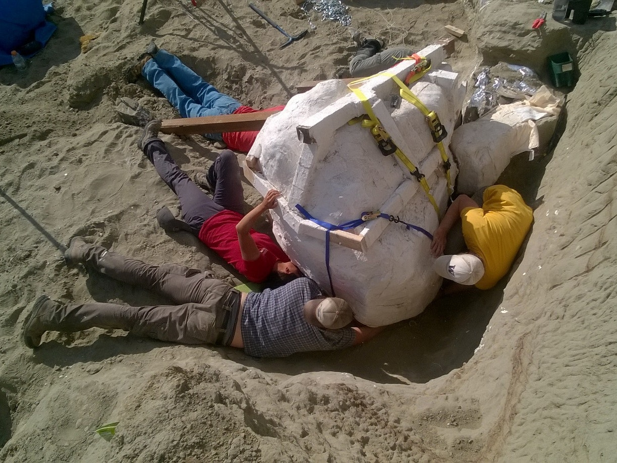 The crew works to safely extract the T. rex skull from its resting place.