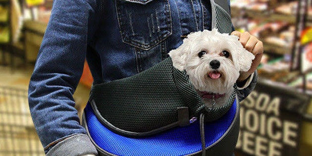 This Is the Most Comfortable Pet Carrier We've Found
