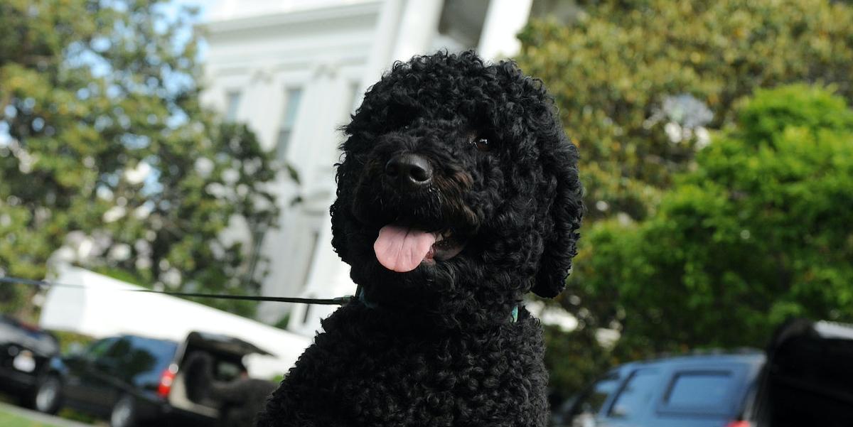 Obama Against Dog Breed