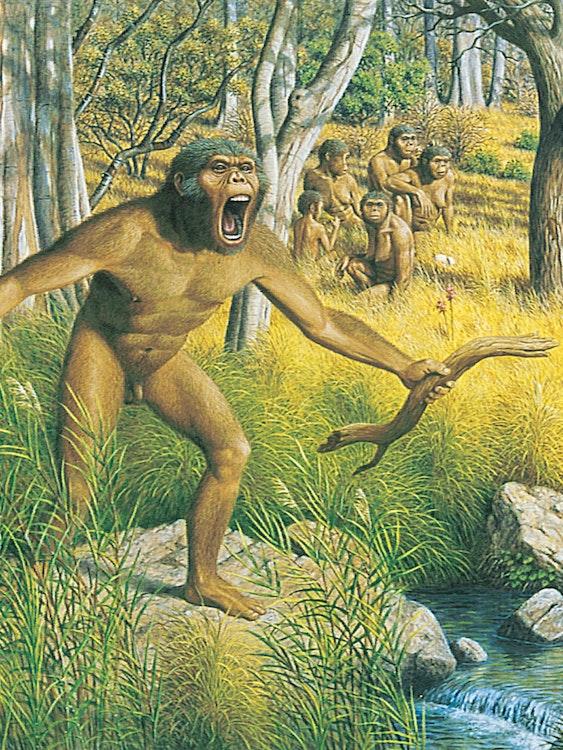 Australopithecus family