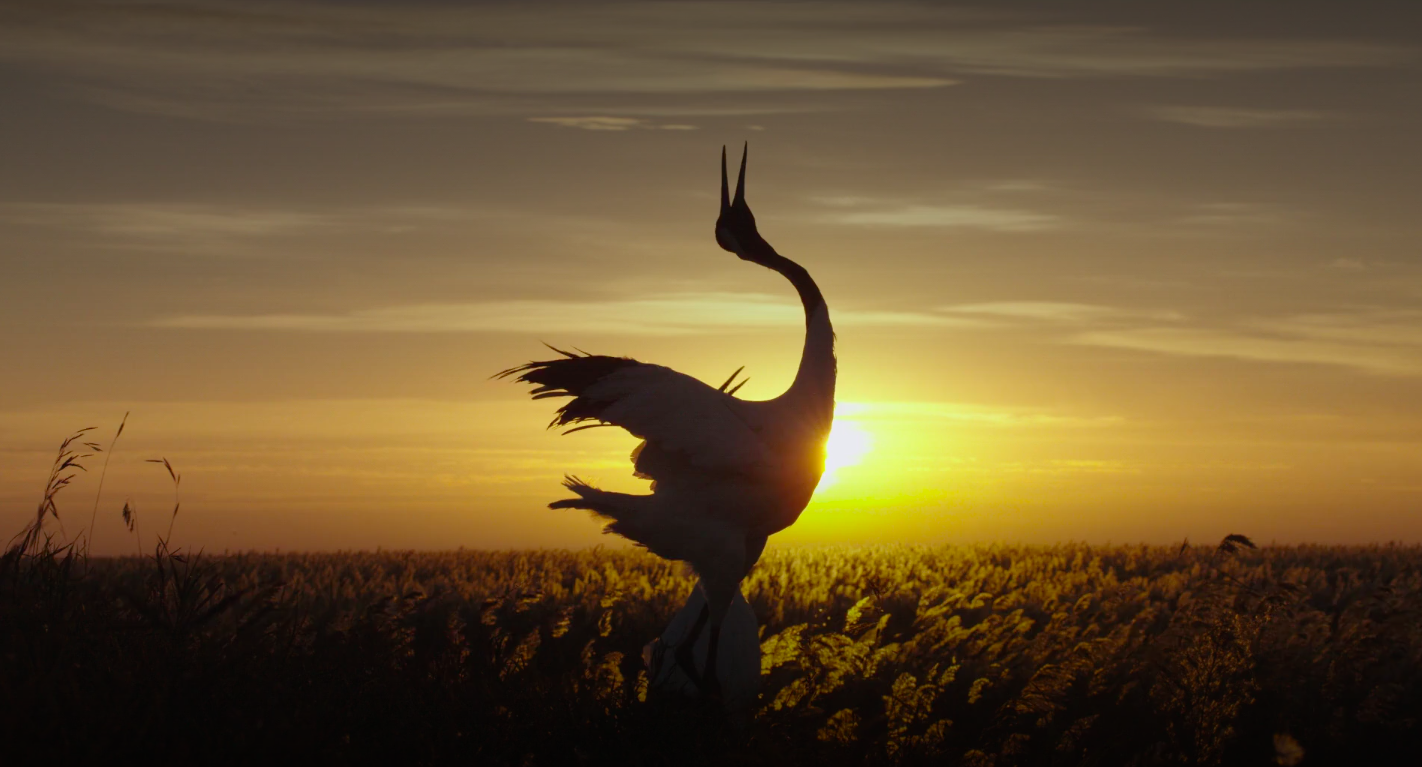 The crane is one of five animals featured in 'Born in China'.