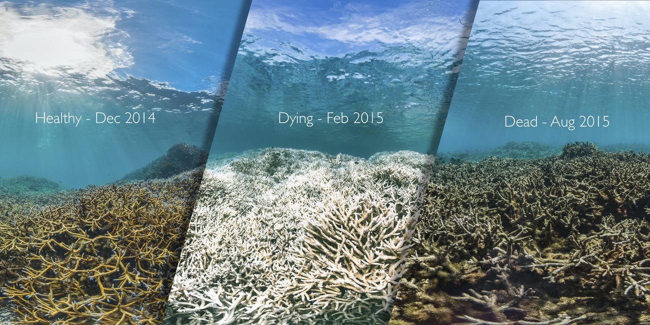 THE DEATH OF A CORAL REEF