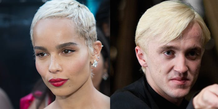 Tom Felton and Zoe Kravits might redeem Slytherin in the 'Fantastic Beasts and Where to Find Them' sequels