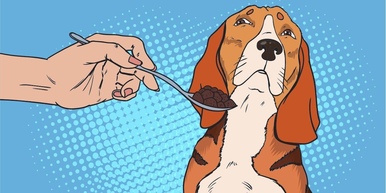 Pop Art Beagle Refuses to Eat