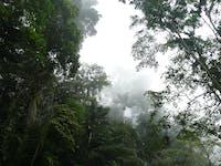 Selva nublada / Cloud forest / Forêt nuageuse