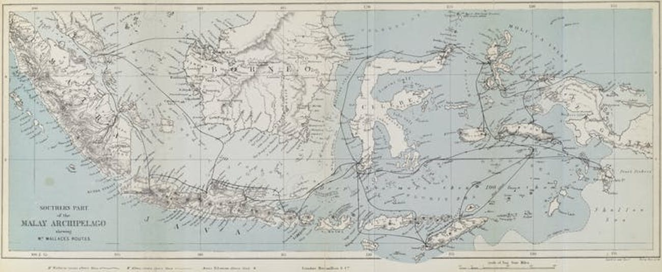 An 1874 map of the Malay Archipelago, tracing Wallace's travels.