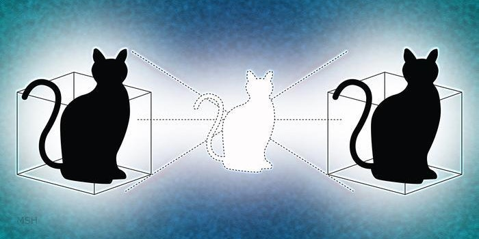 How Physicists Convinced Schrödinger's Cat to Asexually Reproduce