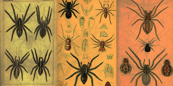A new study has found that spiders can fly. Through the air. Toward your face.