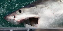 Nuclear Bombs Helped Discover 400 Year Old Sharks