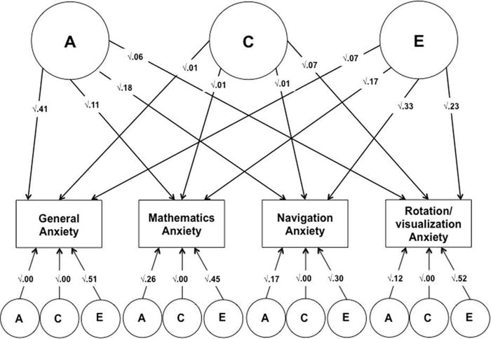 An independent pathway model displaying the origins of and associations between different anxieties.