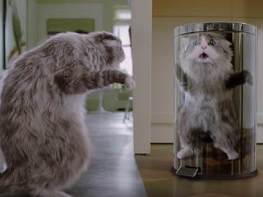 'Nine Lives' is Way More Twisted Than 'Suicide Squad'
