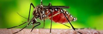 mosquito malaria parasite resistant