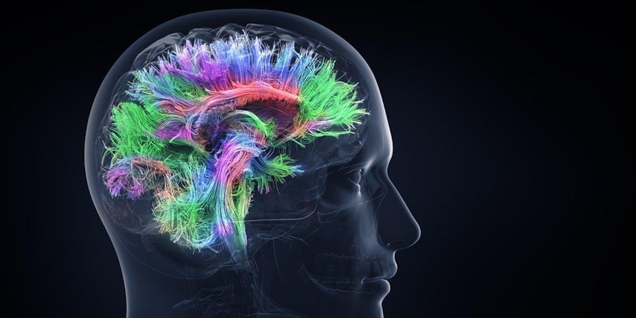 brain genes intelligence genetic controversy