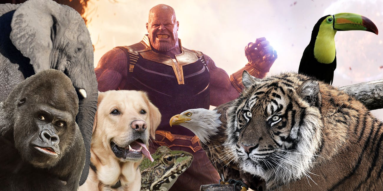 Thanos Killed all the animals