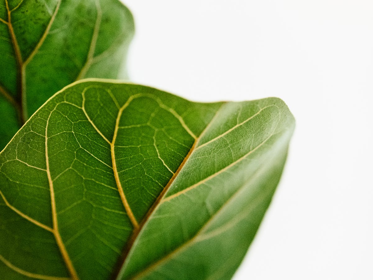 'Artificial leaf' could help planes and heavy transport ditch fossil fuels
