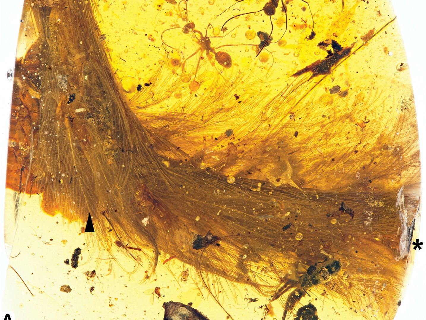 'Jurassic Park' Predicted This Dinosaur Tail Stuck in Amber