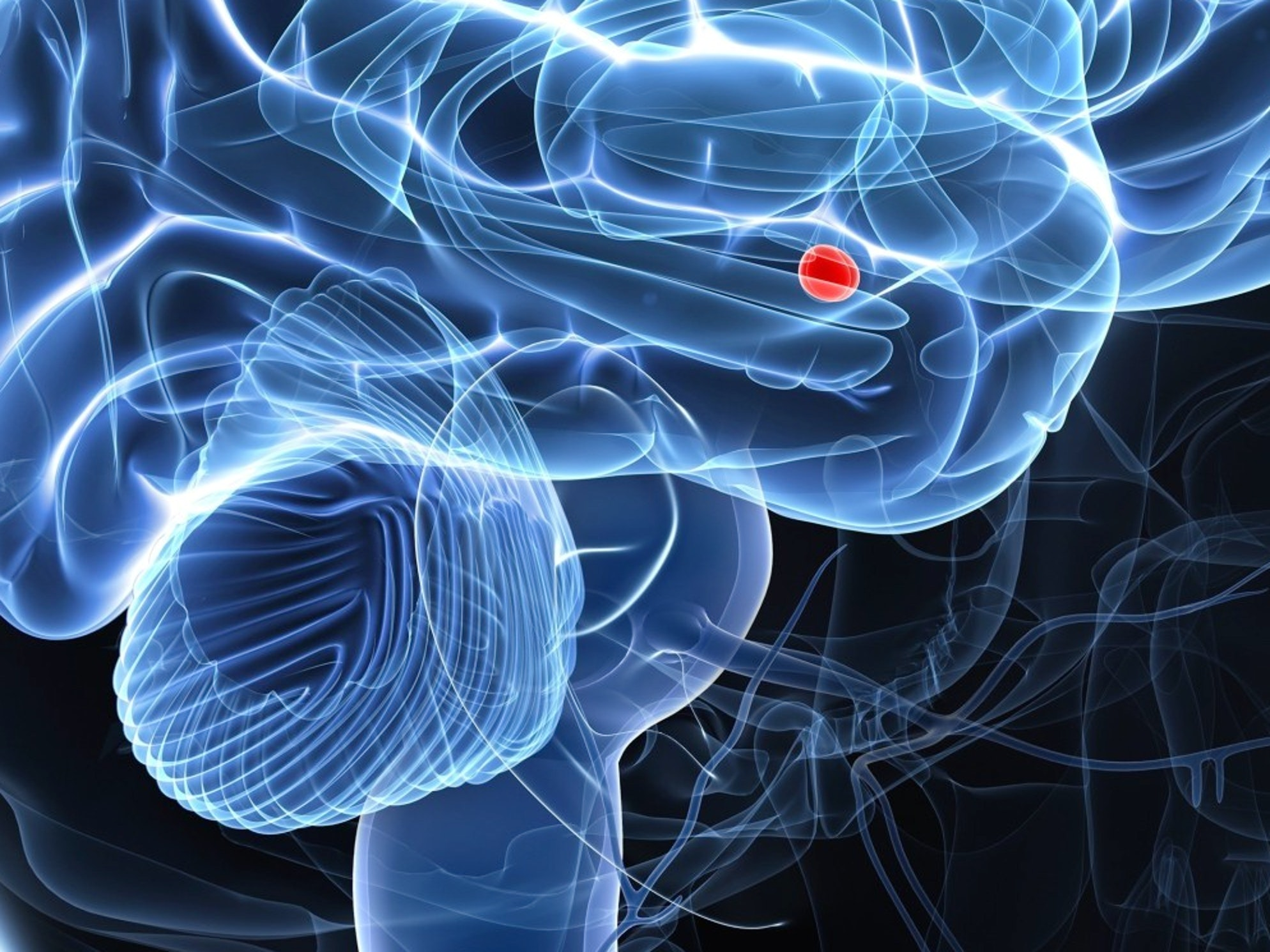 Viral Violence Hijacked Your Amygdala. Go Get It Back.