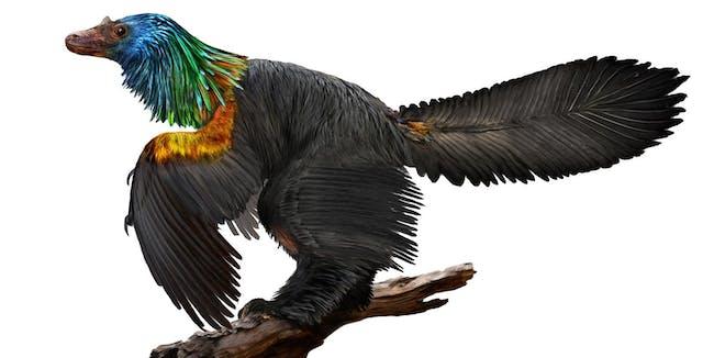 caihong juji dinosaur china