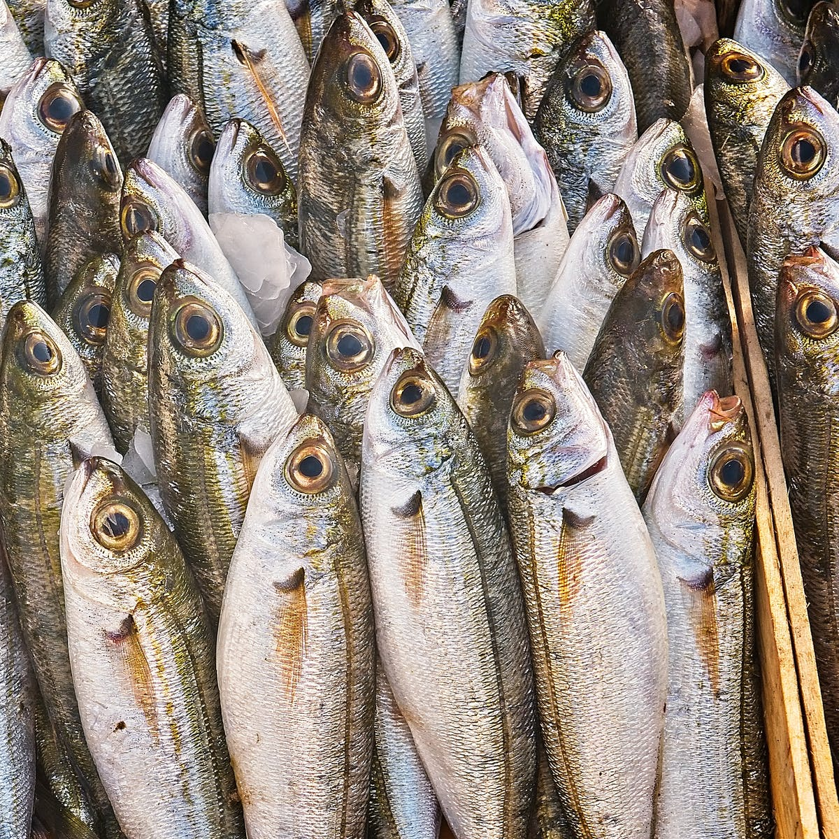 The Omega-3 Crisis: Climate Change Predicted to Cause Global Shortage