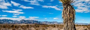 Mountain Landscape Nevada Desert