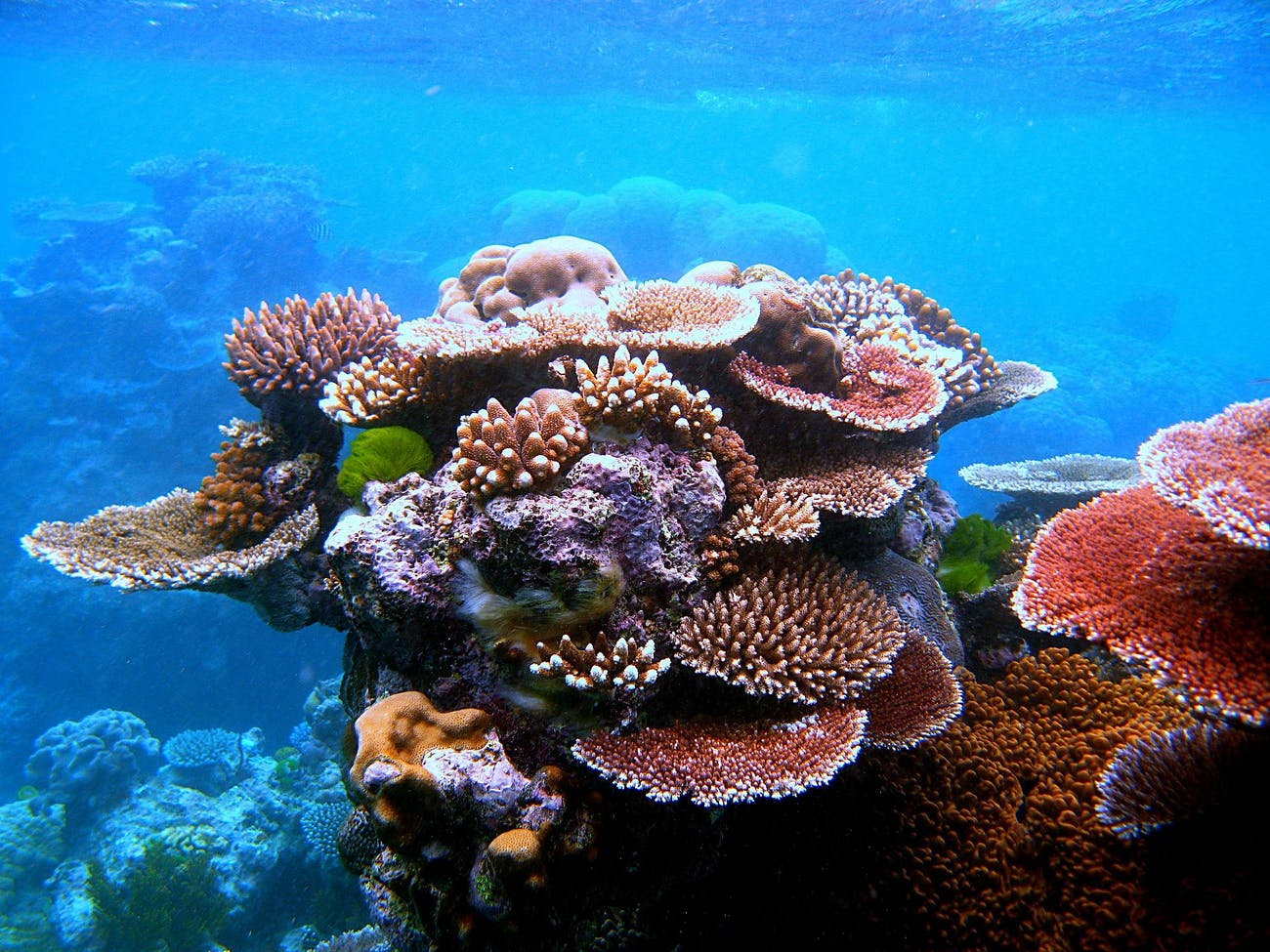 coral reef hawaii