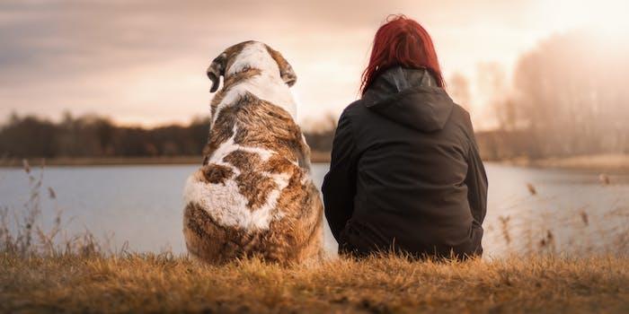dog-human bond
