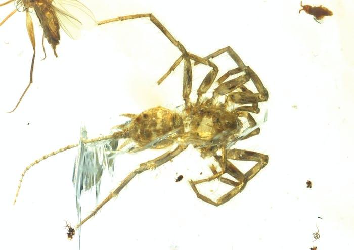 ancient spider-relative