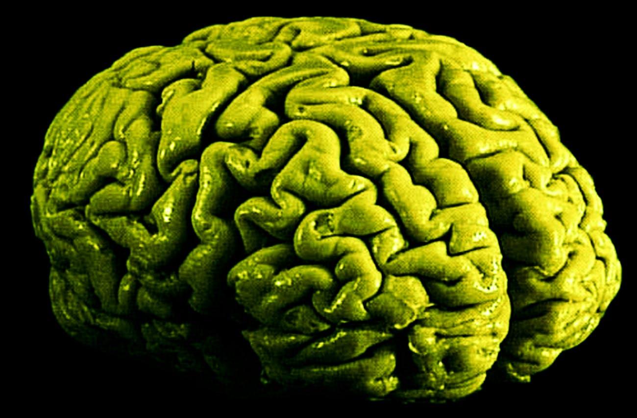 brain on weed